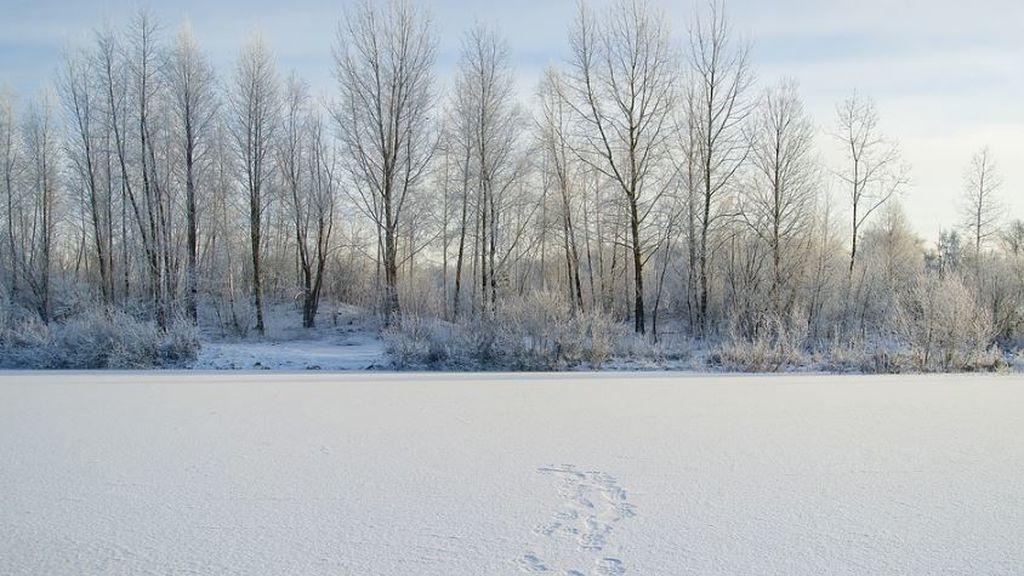 Incendios a -50ºC: el suelo arde en Siberia en uno de los inviernos más fríos que se recuerdan