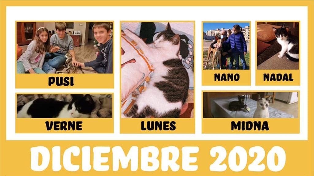Una web y las redes sociales disparan las adopciones de animales en un refugio de Valencia: 31 animales tienen nueva familia
