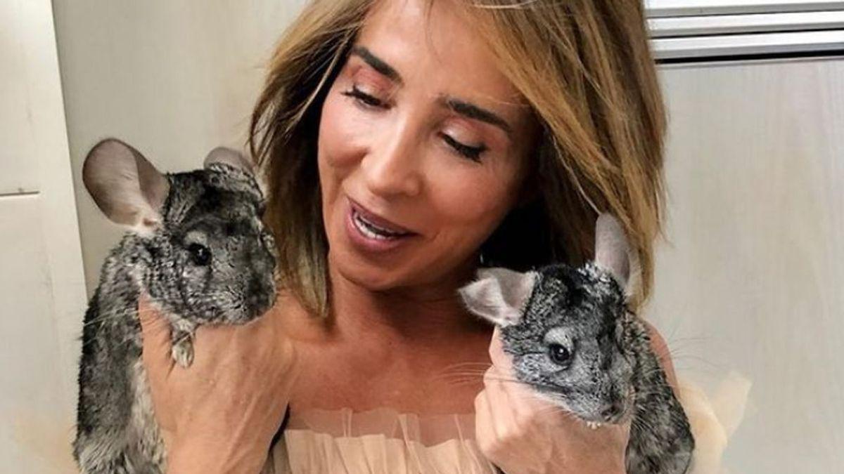 María Patiño da la noticia que más le preocupaba: así está su chinchilla tras ser intervenida
