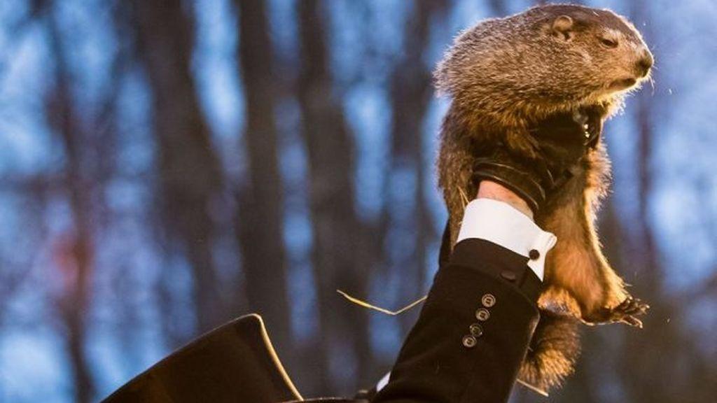 Día de la Candelaria 2021: ¿qué tiene que ver con el tiempo? ¿Y con el Día de la Marmota de Estados Unidos?