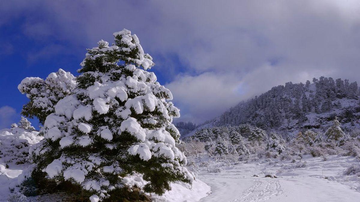 Luz verde para que la Sierra de las Nieves sea declarado Parque Natural