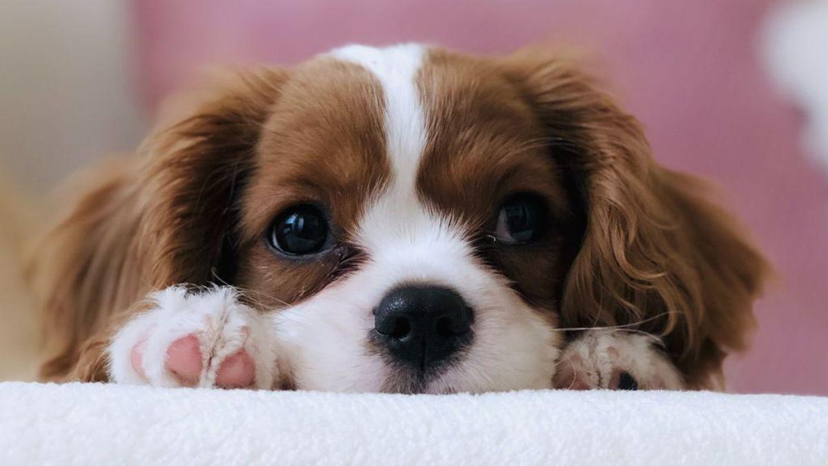 """""""Mi perro llora por las noches"""": los motivos más habituales"""