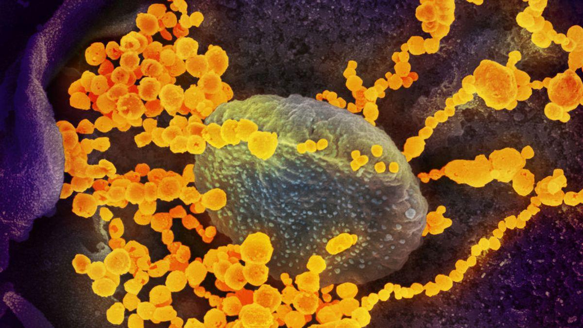El CSIC diseña un test anticuerpos para covid-19 más sensible y fiable al 99%
