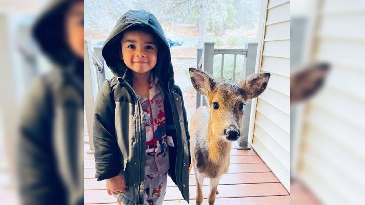 Un niño de cuatro años sale a pasear por el bosque y vuelve con un cervatillo como mascota