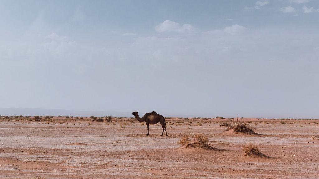 ¿Qué factores hicieron fértil en el pasado lo que hoy es el desierto de Sáhara?