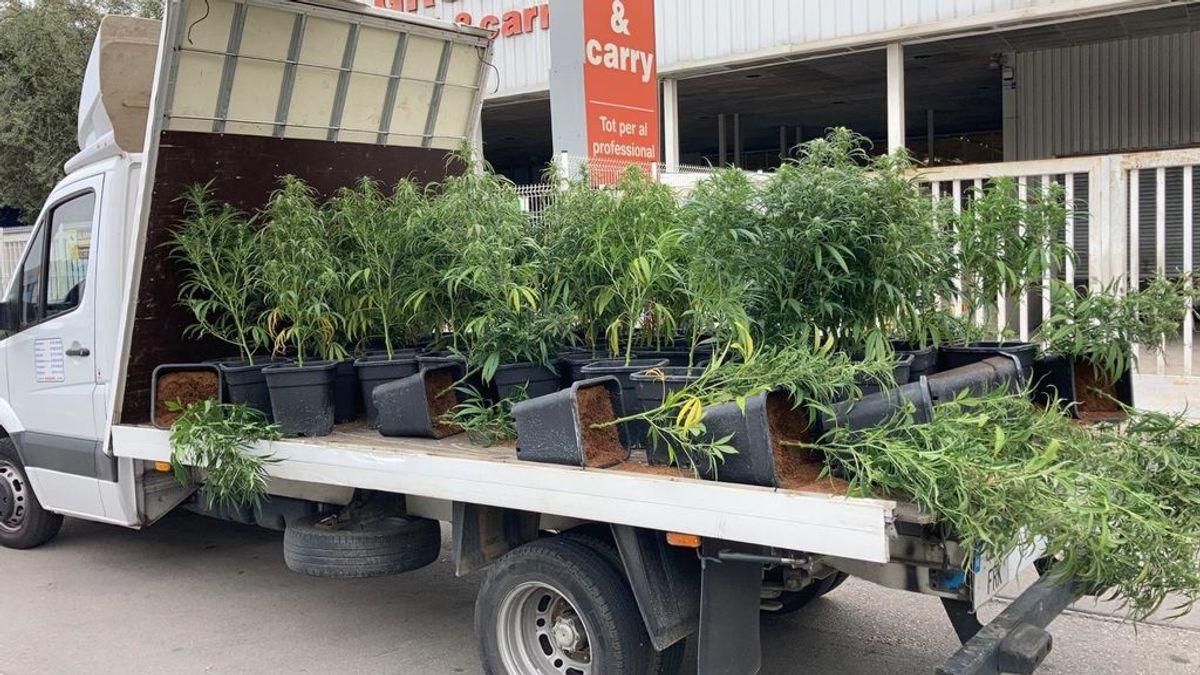 La policía detiene a un hombre tras estrellar su camión lleno de marihuana en Gavà