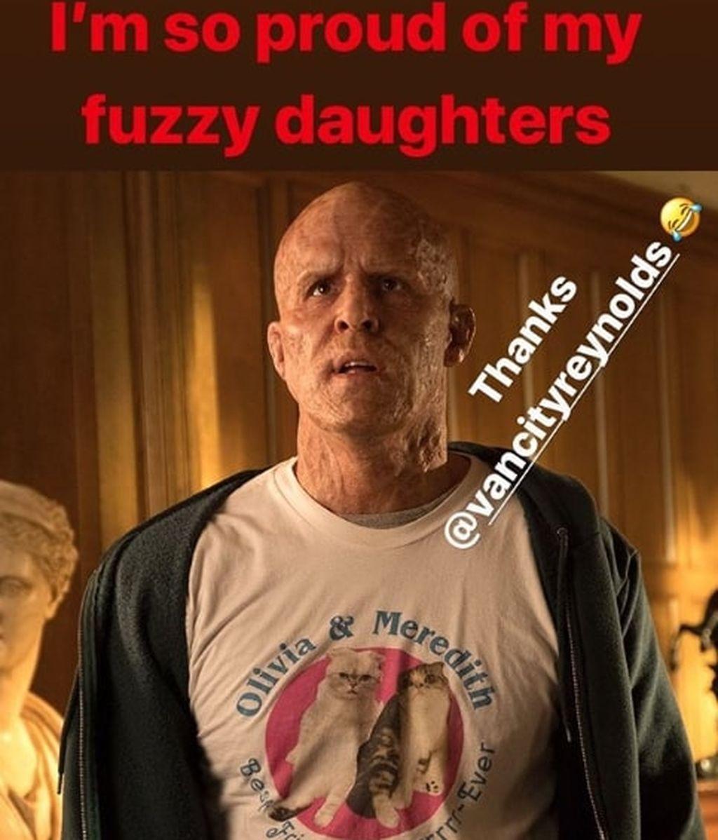 Taylor Swift Instagram Gatos Deadpool