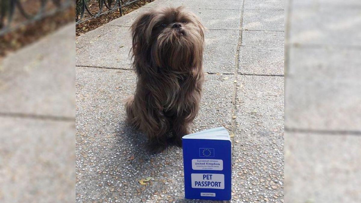 La historia de Chewy, el perrito británico que perdió su pasaporte en México