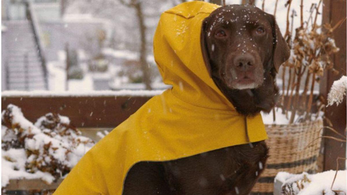 Zara lanza una línea de ropa para mascotas