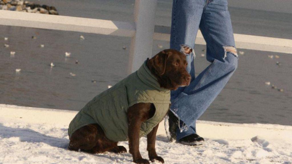Perro con chaleco acolchado