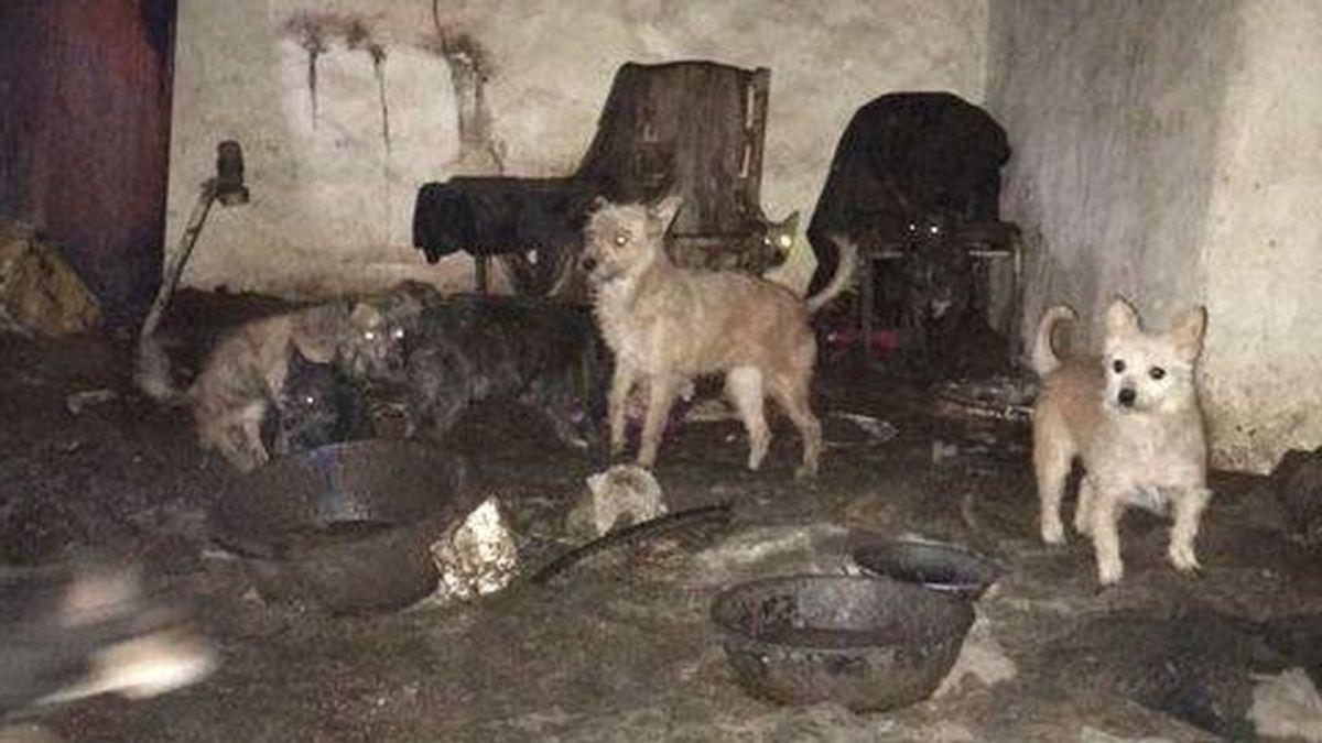 Rescatados 28 perros al borde de la muerte en un cortijo abandonado en Córdoba