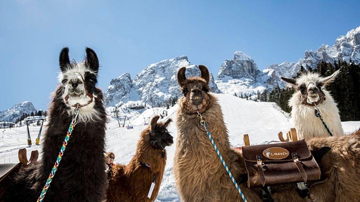 Italia bloquea la reapertura de las estaciones de esquí
