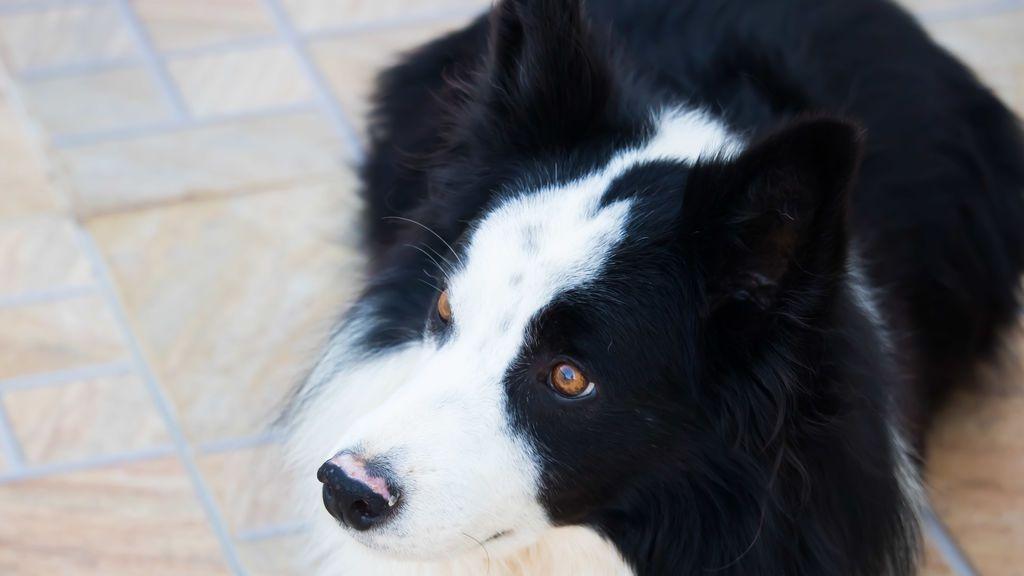 Un perro hereda cinco millones de dólares tras la muerte de su dueño
