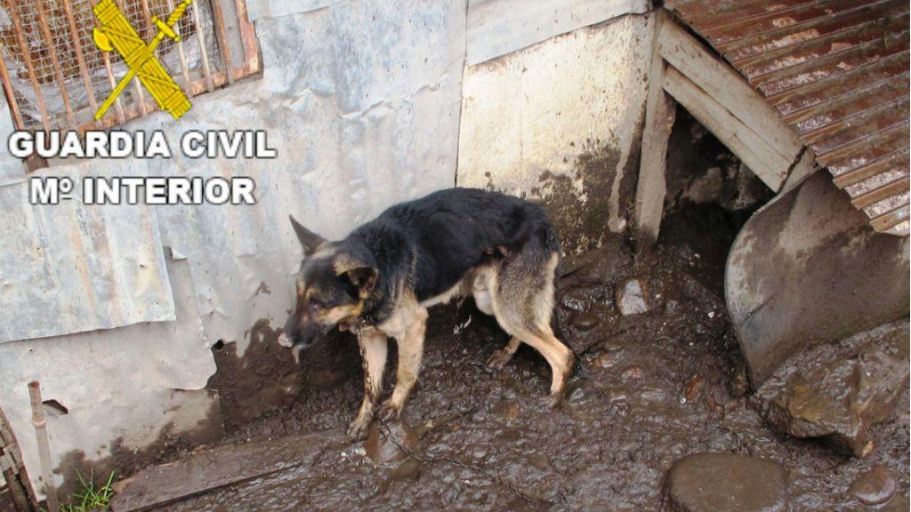 Dos investigados en León por abandono y maltrato a perros encadenados