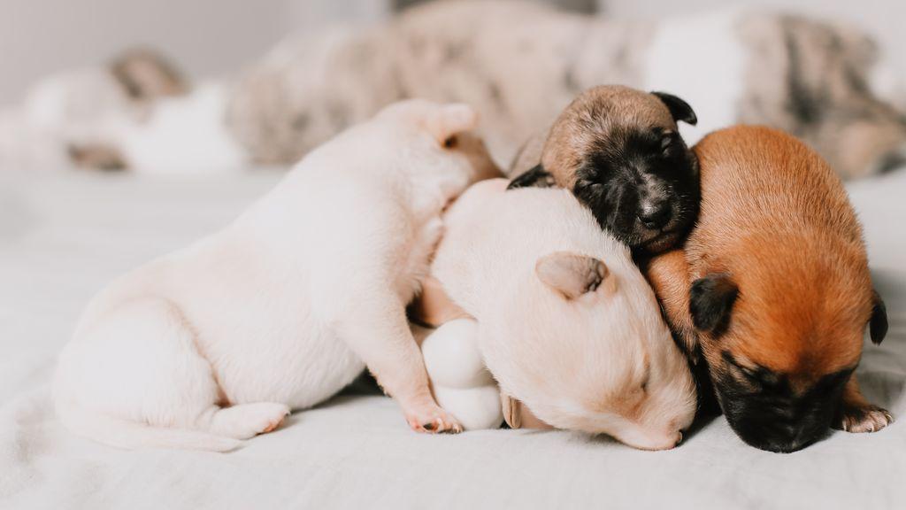 Nace Cíclope, un perro sin nariz, con un solo ojo y dos lenguas