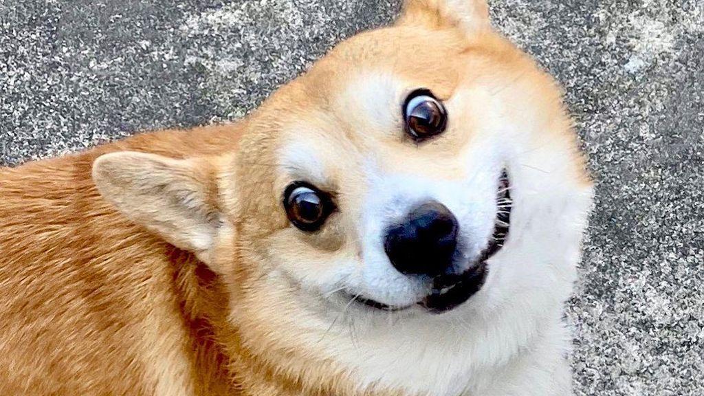 """La despedida de su dueño a Gen, el perro corgi protagonista de miles de memes: """"Vivió la vida al máximo"""""""