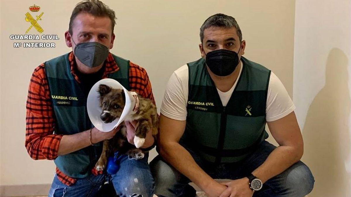 Detenido un joven por maltratar a un cachorro: lo tenía amordazado con un calcetín y atado a un palé