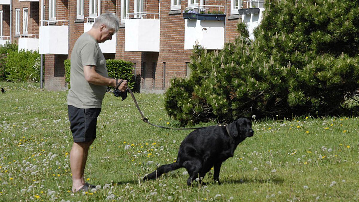 Abandonar los excrementos caninos en la calle sale casi gratis en España