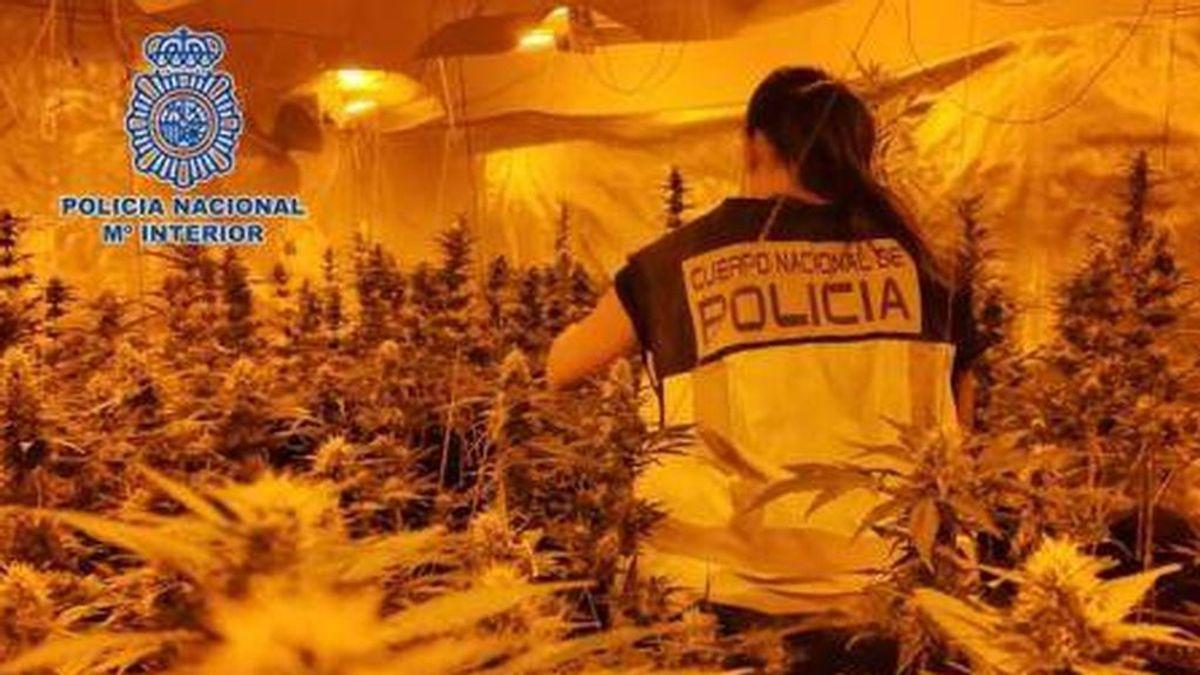 Cinco detenidos por plantar y vender marihuana en pisos para profesores de un colegio de Madrid