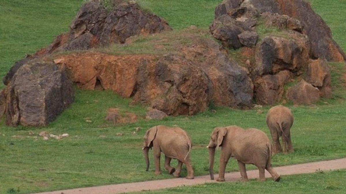 """Una imprudencia por """"exceso de confianza"""" costó la vida al operario de Cabárceno golpeado por una elefanta"""