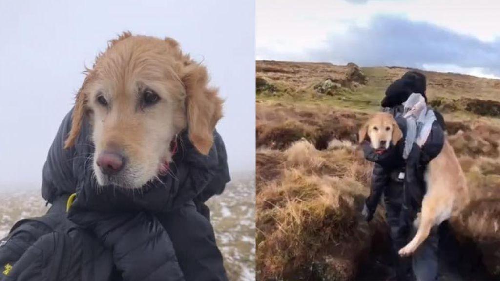 Denunciar a una pareja que rescató a una perrita de morir congelada por saltarse el confinamiento