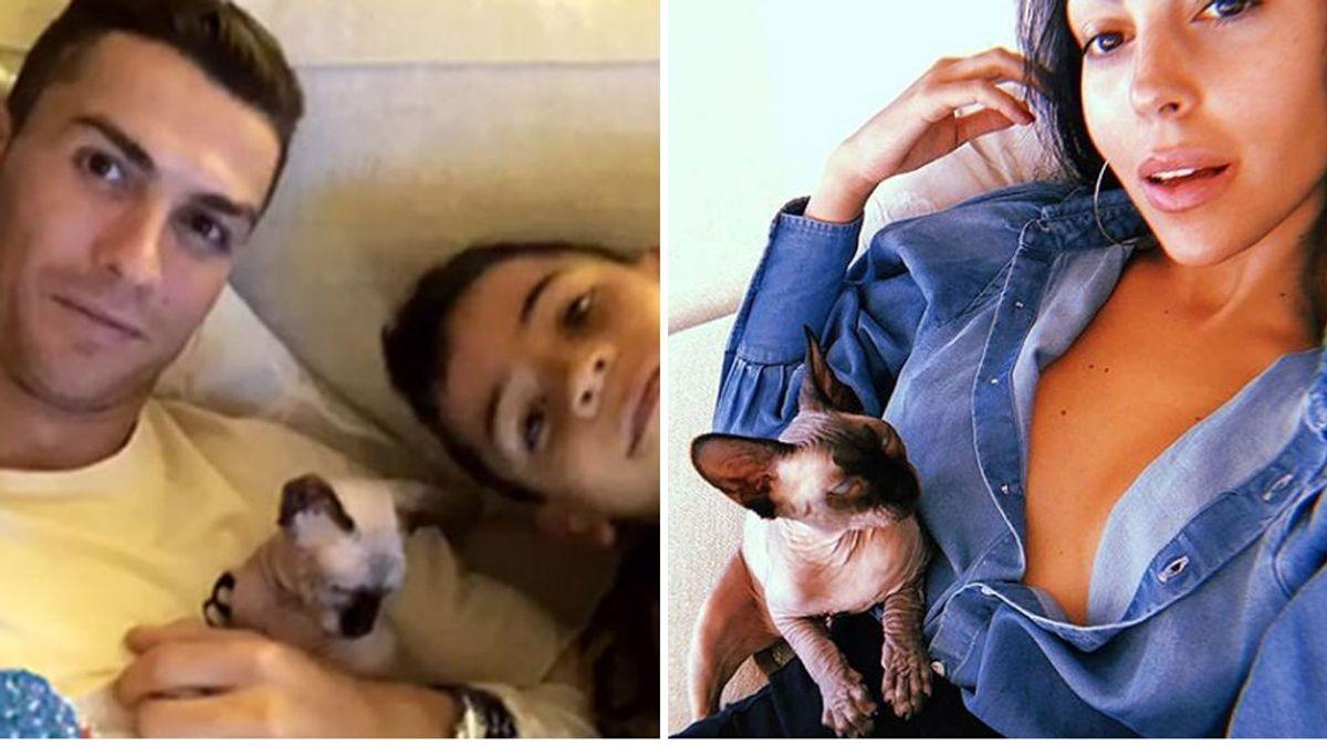 Cristiano y Georgina mandan a su gato Pepe en jet privado a España tras ser atropellado