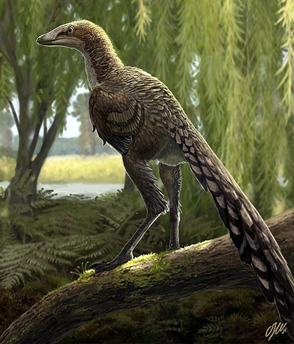 Descubren al Tiranosaurio de los Pirineos: el 'Tamarro insperatus'