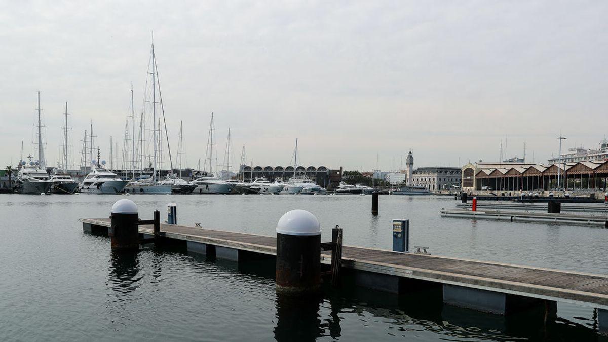 El rescate a un jabalí que cayó al mar en el puerto de Valencia tras campar a sus anchas por las calles