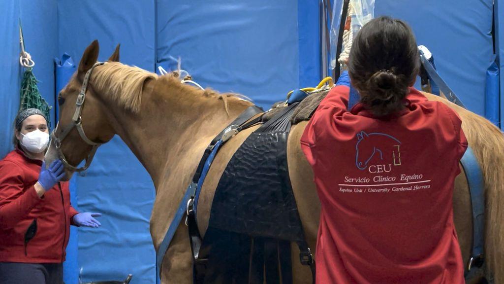 Coronavirus caballos