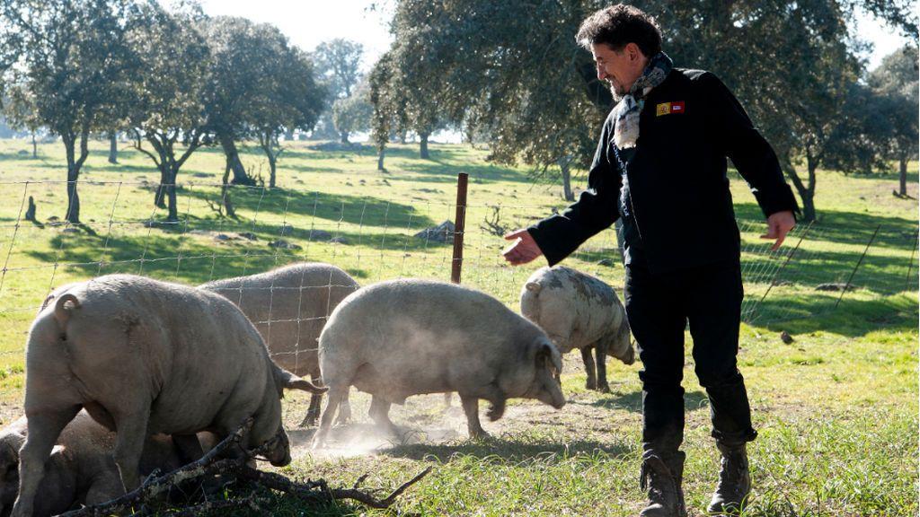 La alimentación y el entorno, claves para el cerdo ibérico
