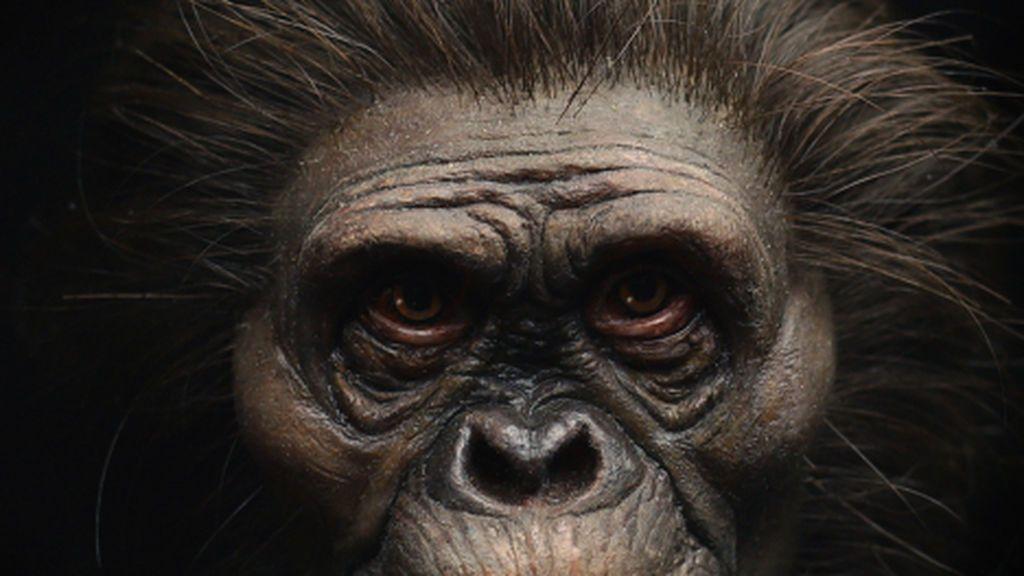 Científicos y artistas reconstruyen el rostro del ancestro humano Lucy