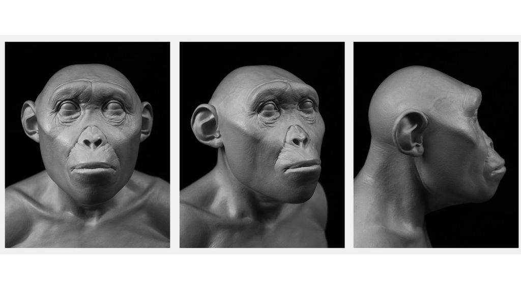 frontiers-ecology-evolution-hominin-evolution-soft-tissue-reconstruction-6_fig_4