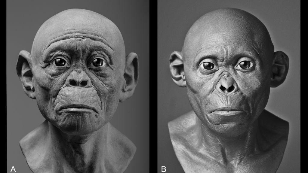 frontiers-ecology-evolution-hominin-evolution-soft-tissue-reconstruction-4_fig_3_border
