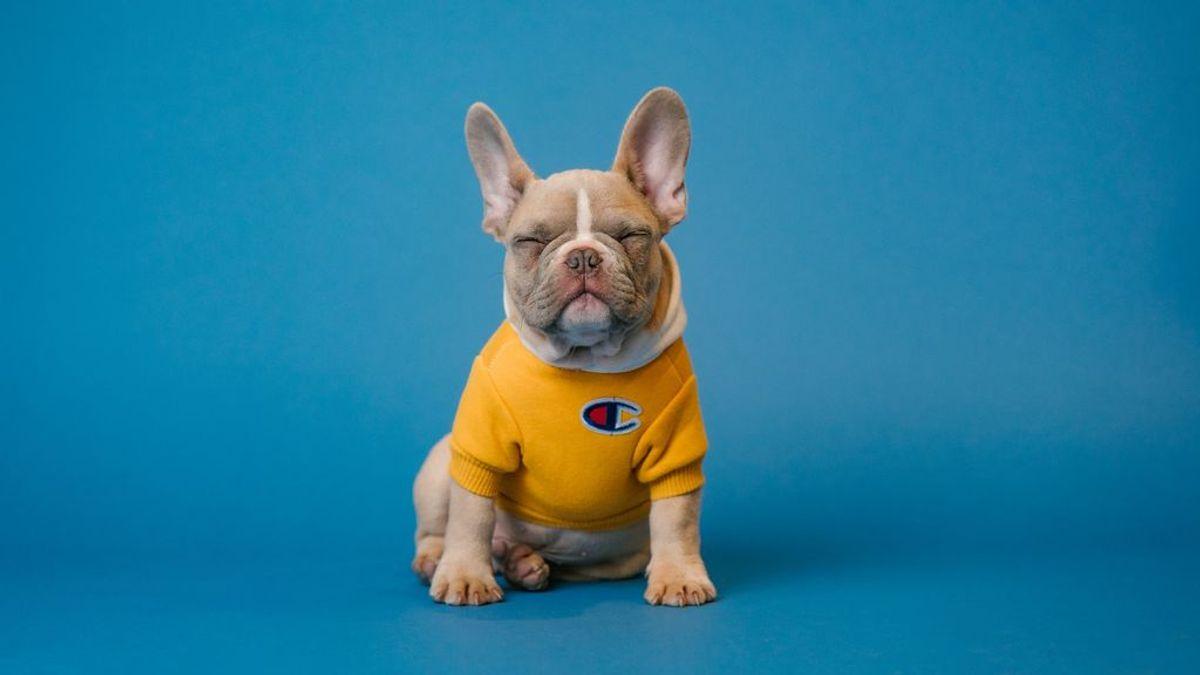 'Dogfluencer', así se les llama a los perros influencers que triunfan en redes