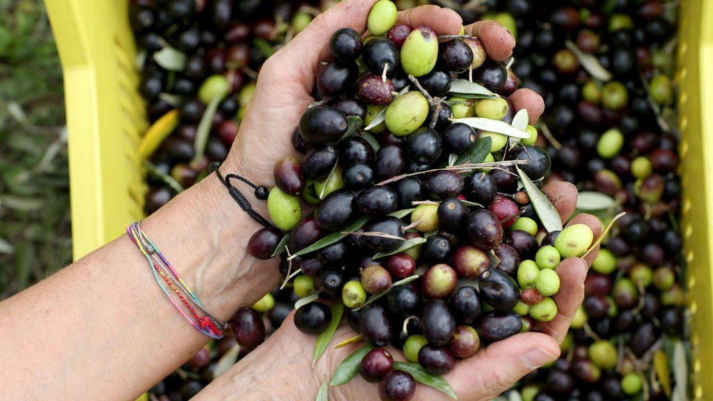 Vía libre a las aceitunas y el vino español tras la tregua arancelaria entre la UE y EEUU