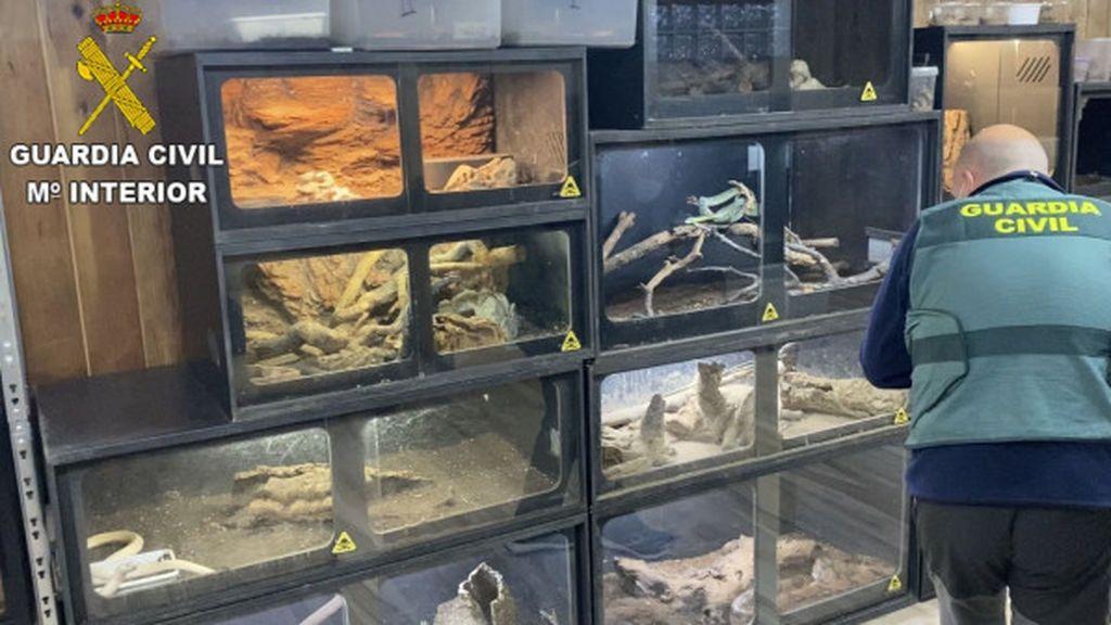 Investigan al hombre que fue mordido por una serpiente de cascabel por poseer 40 reptiles muy peligrosos