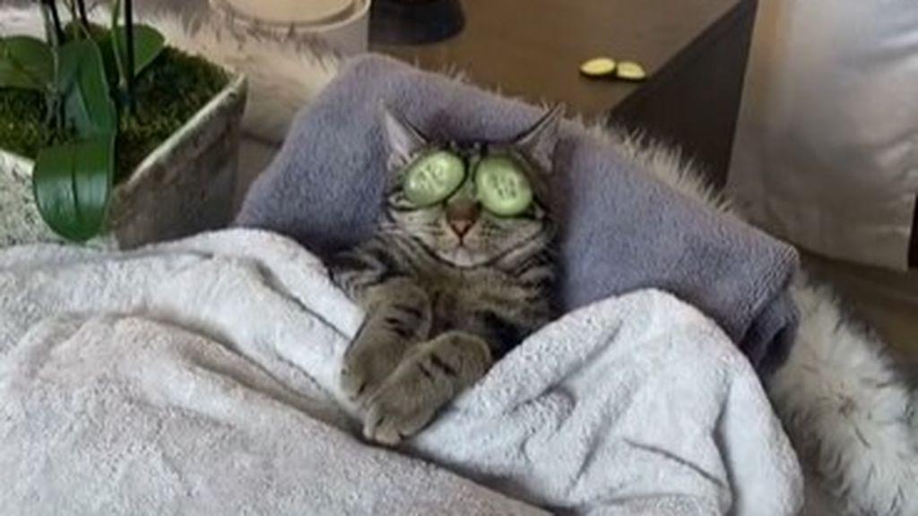 Gato descansando en el spa