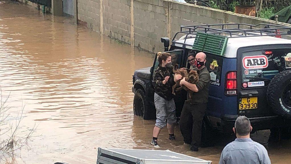 Rescate de perros por las inundaciones en Cádiz