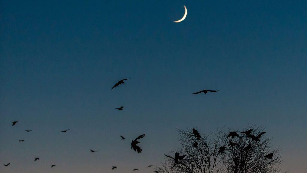 """""""He creado un ejército de cuervos por accidente"""": la historia viral de una mujer protegida por estas aves"""