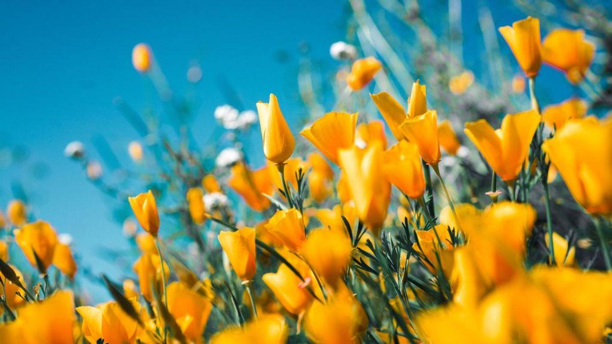 Equinoccio de primavera: Cuándo es y qué simboliza