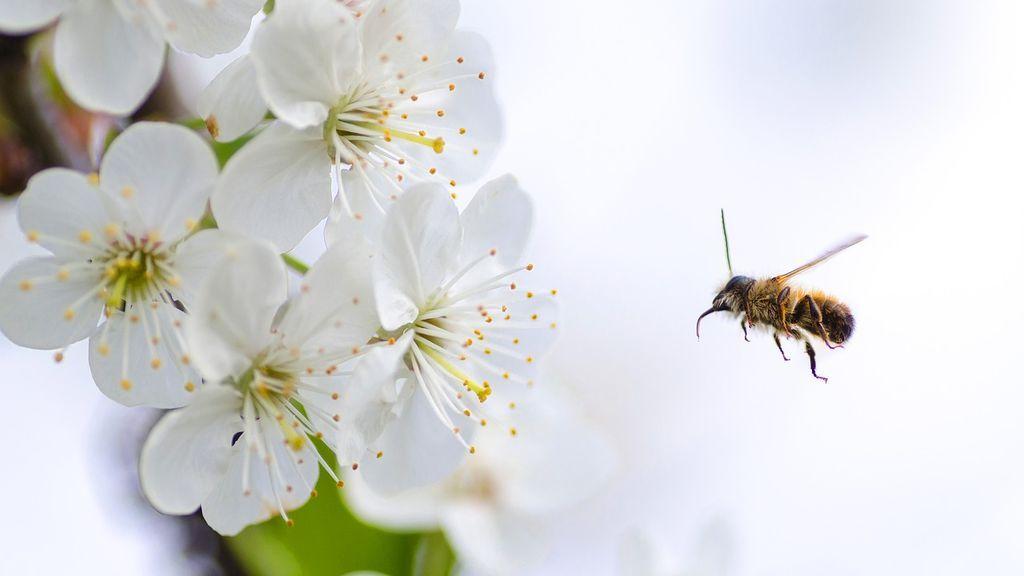 ¿Influye el aumento de polen en que hayan más contagios por covid?