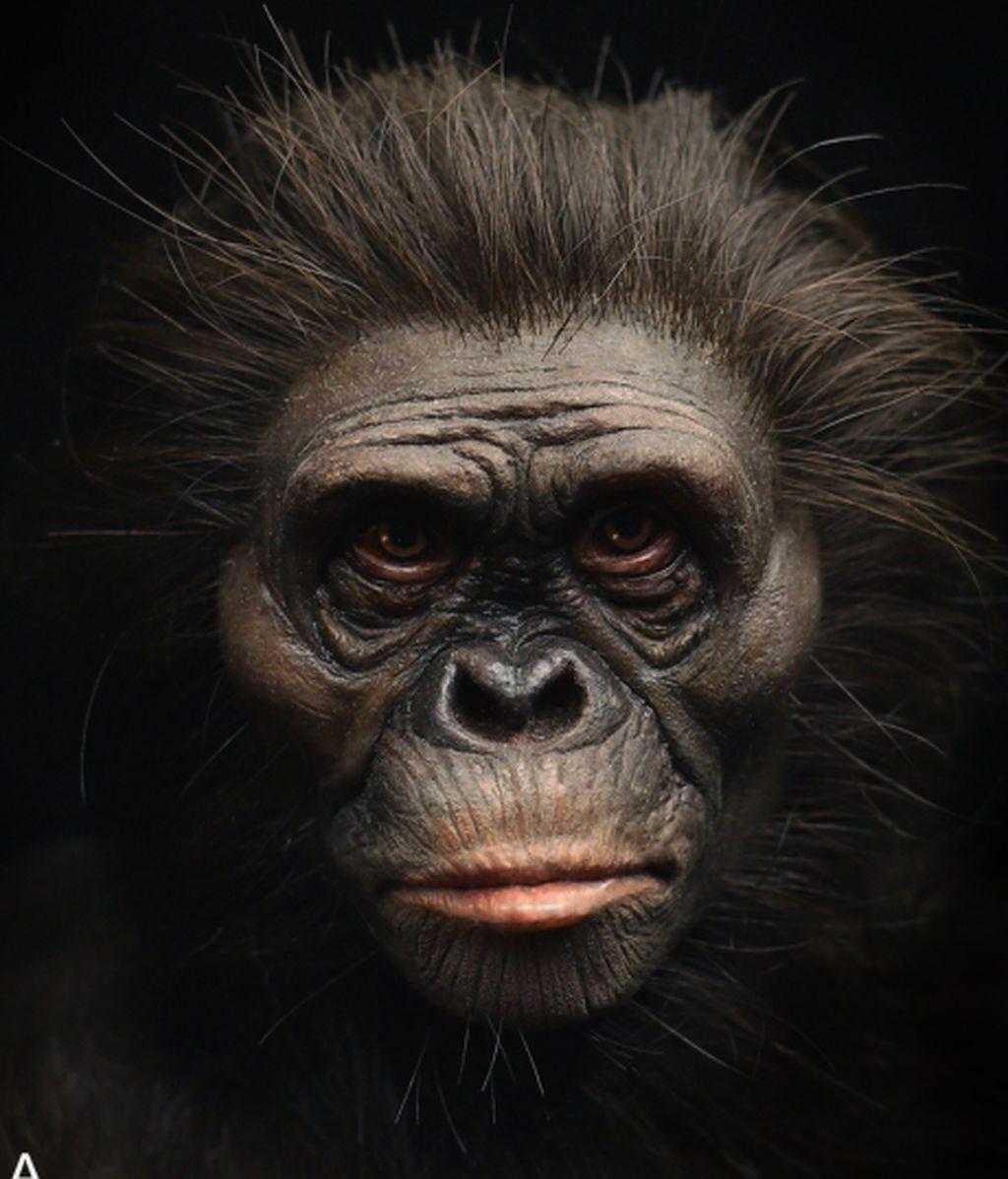 frontiers-ecology-evolution-hominin-evolution-soft-tissue-reconstruction-10-1