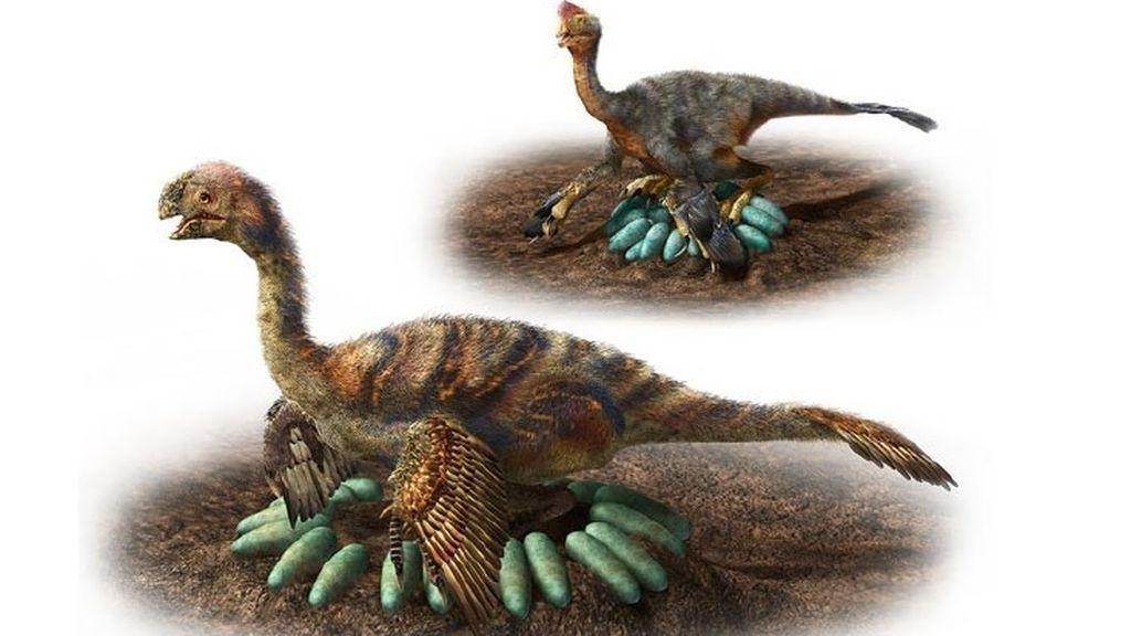 Encuentran los restos de un dinosaurio incubando huevos con embriones fosilizados