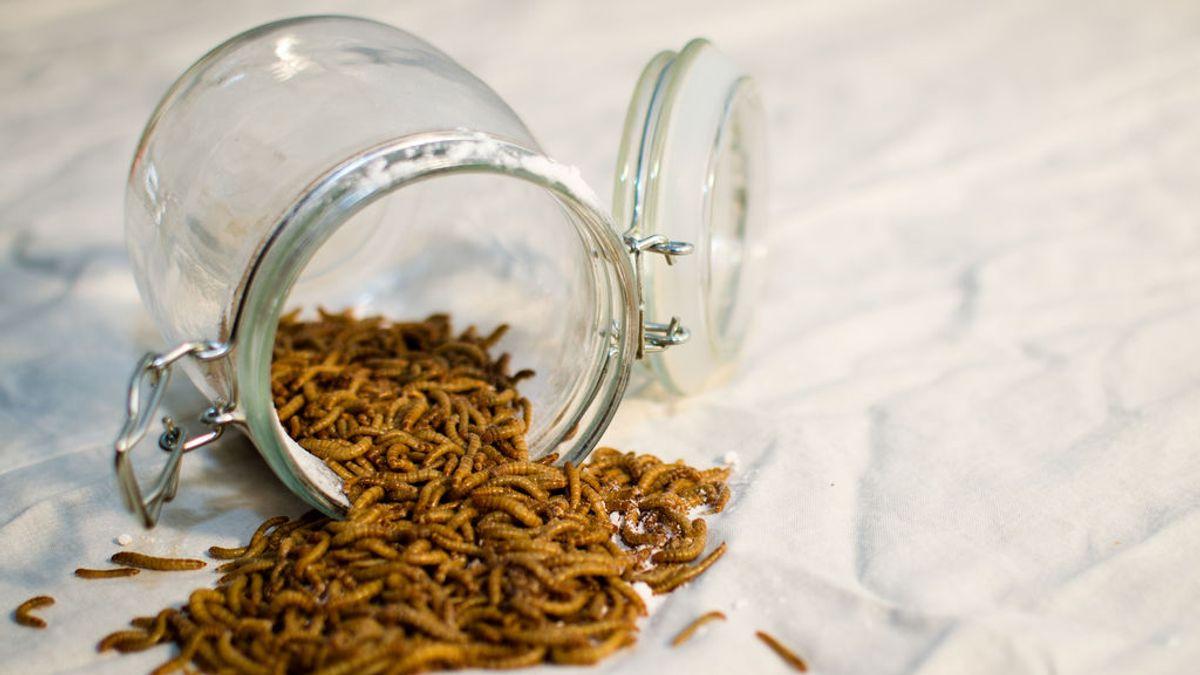La harina de gusanos ayuda a prevenir la diabetes