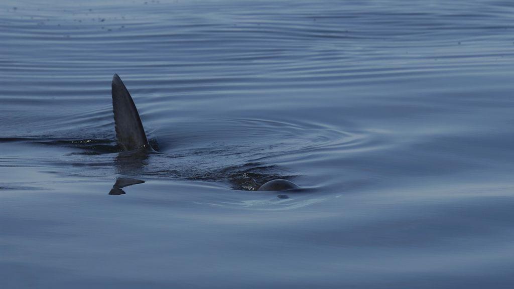 Un tiburón en Cádiz: se hace viral un vídeo supuestamente grabado frente a la playa Victoria
