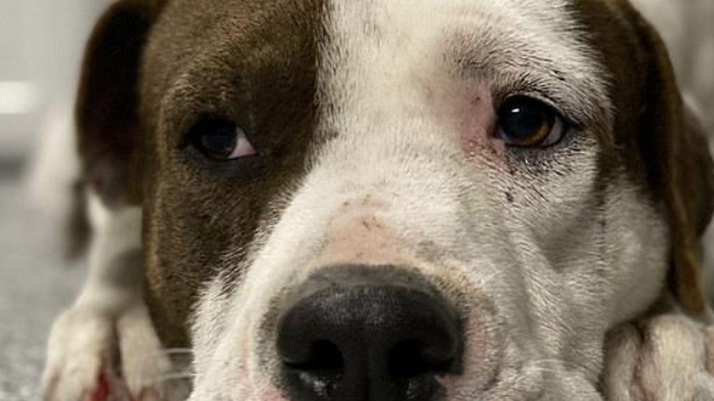 Boomer, el perro callejero que triunfa en Tik Tok por su timidez
