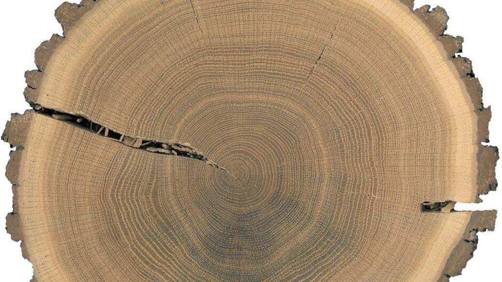 Anillos de árbol
