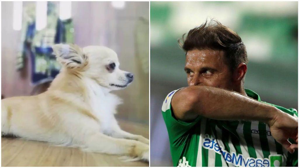 """Joaquín, muy apenado tras el fallecimiento de su perro: """"Hasta siempre amigo"""""""