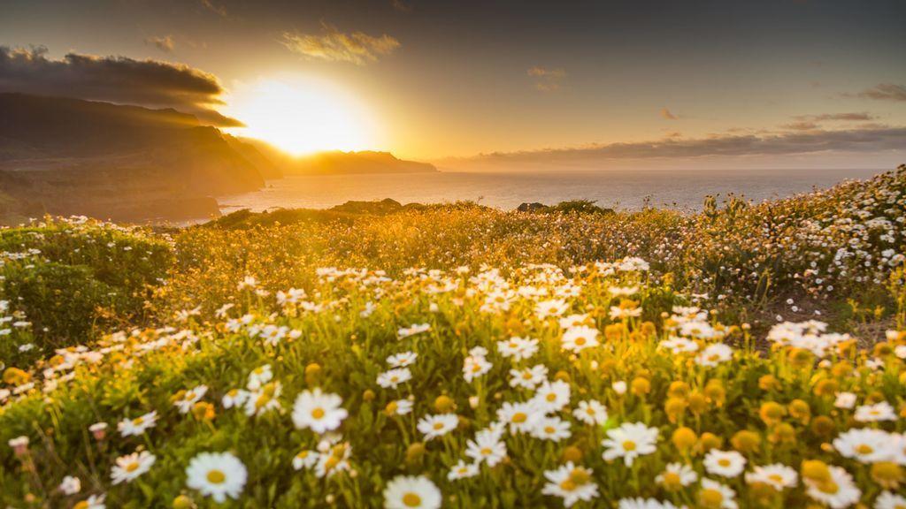 ¡Se acerca el inicio de la primavera! Todo sobre el equinoccio y la estación más esperada