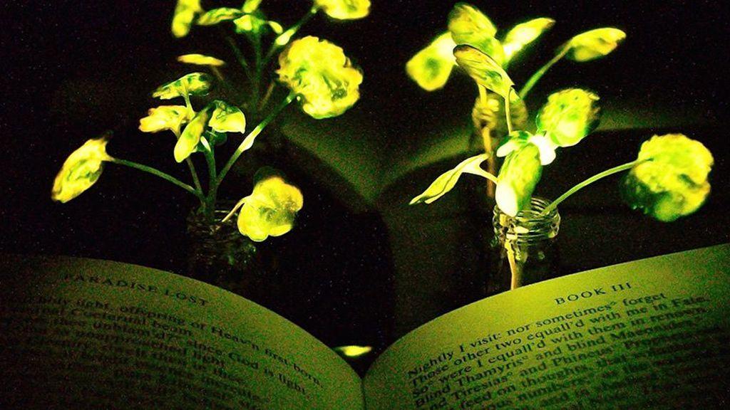 Plantas que dan luz